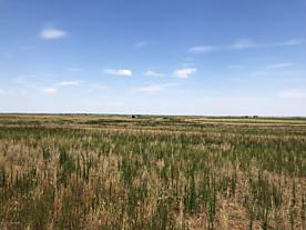 Photo of Co Rd 15 Lakeview, TX 79239