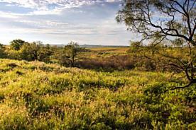 Photo of Collingsworth River Ranch Shamrock, TX 79079