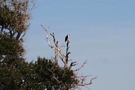 Photo of Intracoastal Island St Augustine, FL 32080
