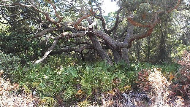 Photo of 122 Lake Margaret Blvd. Pomona Park, FL 32181
