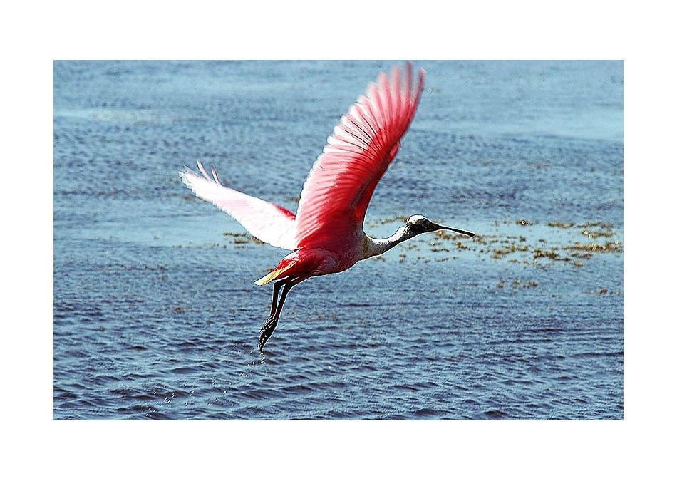 Photo of 345 Pintoresco St Augustine, FL 32095