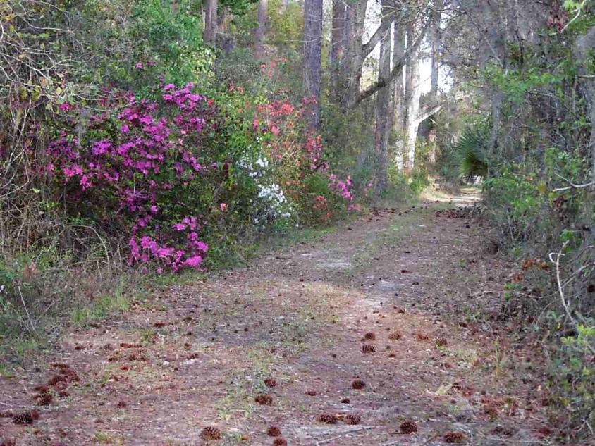 Photo of 3650 Cr 13 South Elkton, FL 32033