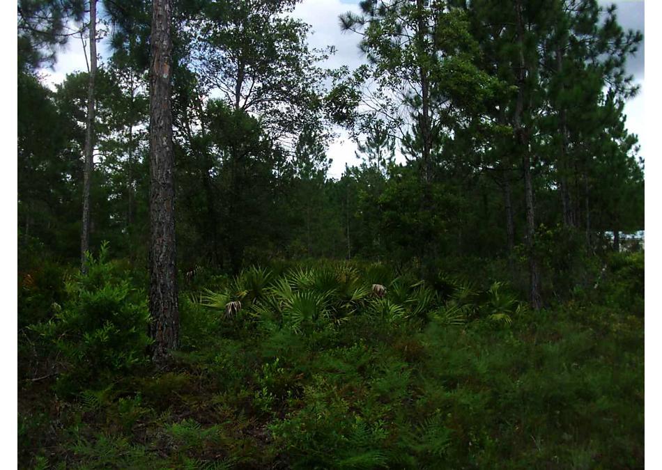 Photo of 10340 Beckenger Ave Hastings, FL 32145