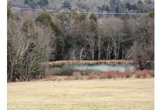 Photo of Bushville Swan Lake Swan Lake, NY 12783