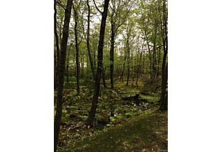 Photo of Pine Hill Road Tuxedo Park, NY 10987