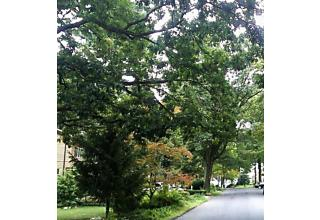 Photo of 18 Hillcrest Dr Wayne, NJ 07470